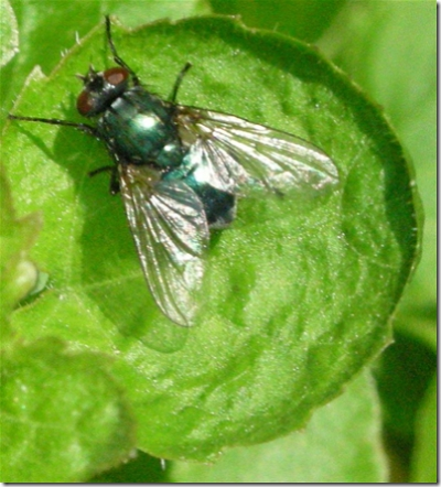 close up of fly on leaf