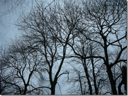 trees with bare winter branches