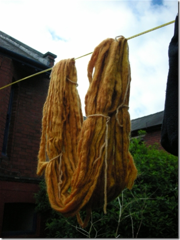 yellowy gold yarn dyed with onion skins
