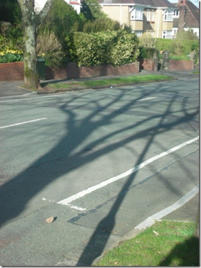 another tree shadow