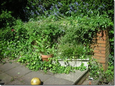 overgrown patio