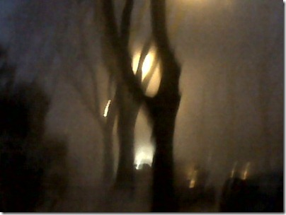 night trees in fog