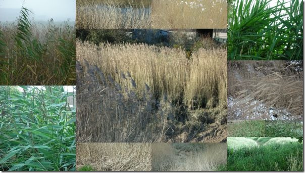 mosaic of reeds photos